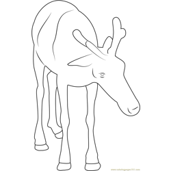 Reindeer Baby Free Coloring Page for Kids