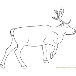 Reindeer Look coloring page