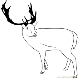Reindeer Looking Back Free Coloring Page for Kids