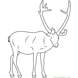 Reindeer Looking Toward to Me Free Coloring Page for Kids