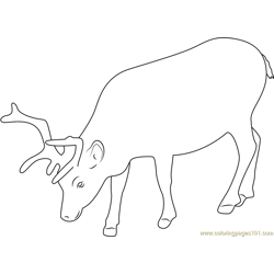 Svalbard Reindeer Free Coloring Page for Kids