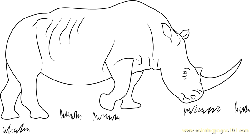 African Black Rhino Coloring Page Free Rhinoceros Coloring Pages ColoringPages101