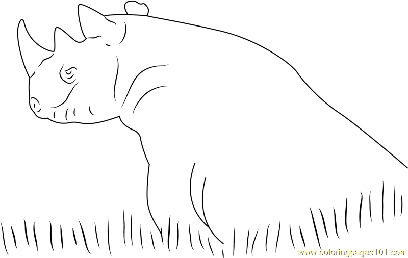 Black Rhino In Grass Coloring Page