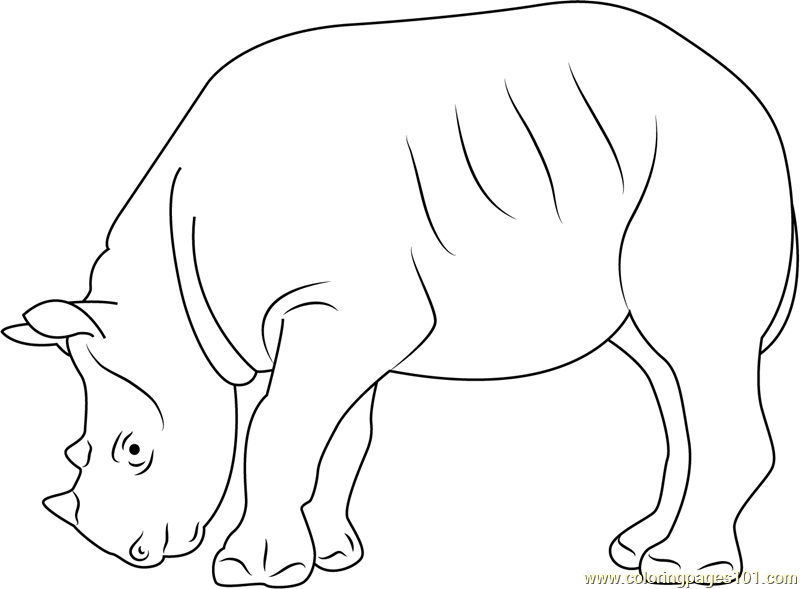 Black Rhino Coloring Page Free Rhinoceros Coloring Pages