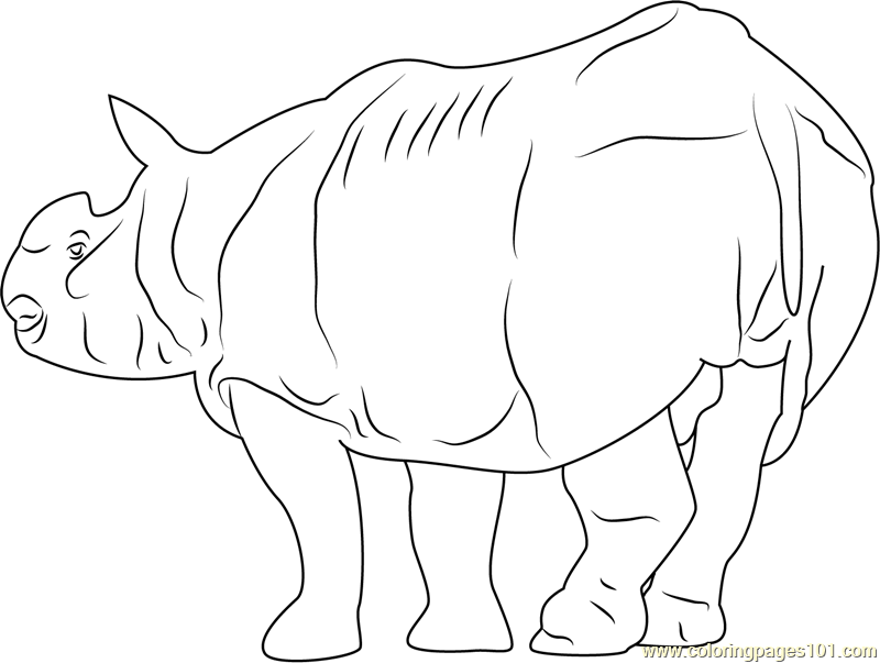 Fat Rhino Coloring Page