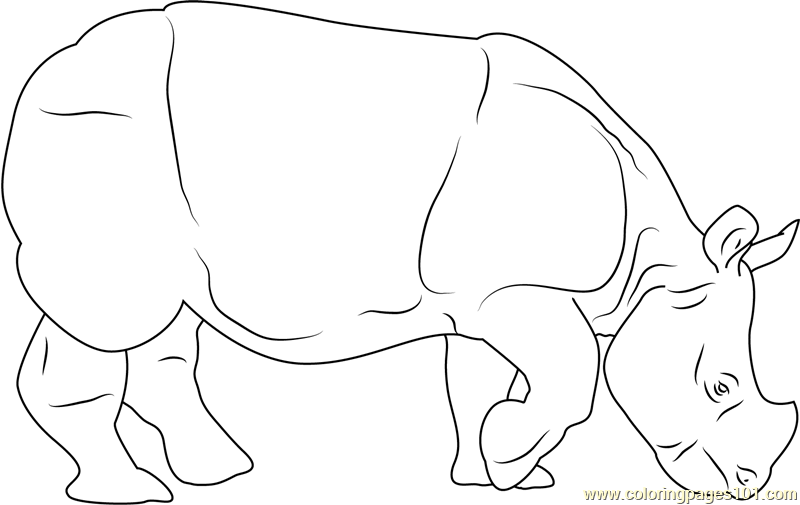 graphic regarding Rhino Printable referred to as Indian Rhino printable coloring site for little ones and grown ups