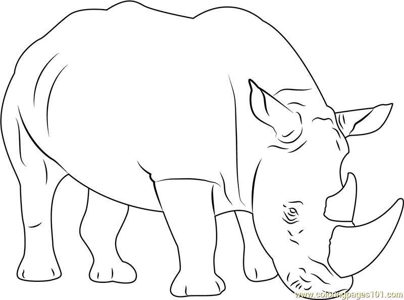 Rhinoceros Coloring Pages - Printable Coloring Pages of Rhinoceroses