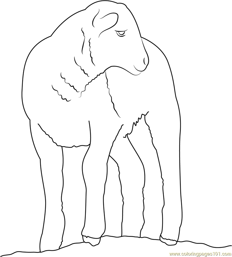 Baby Sheep Coloring Page Free