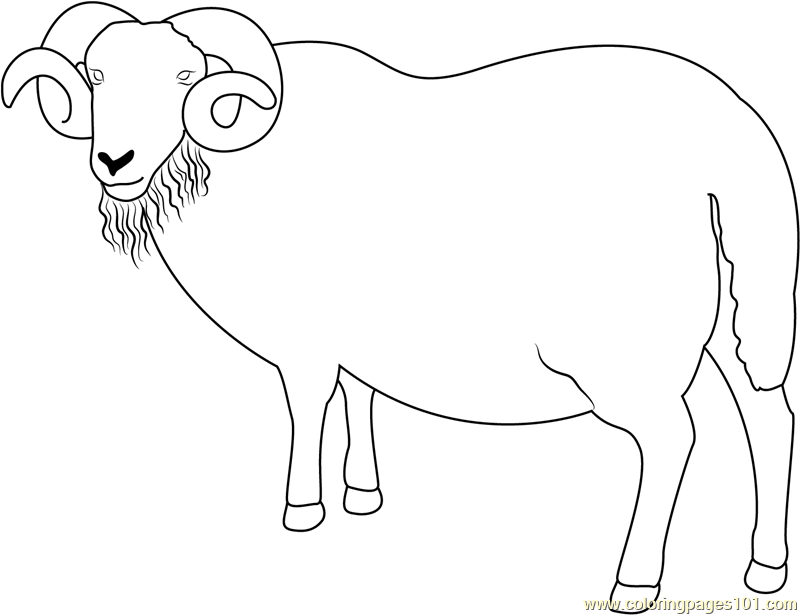 Blackface Ram Sheep Coloring Page
