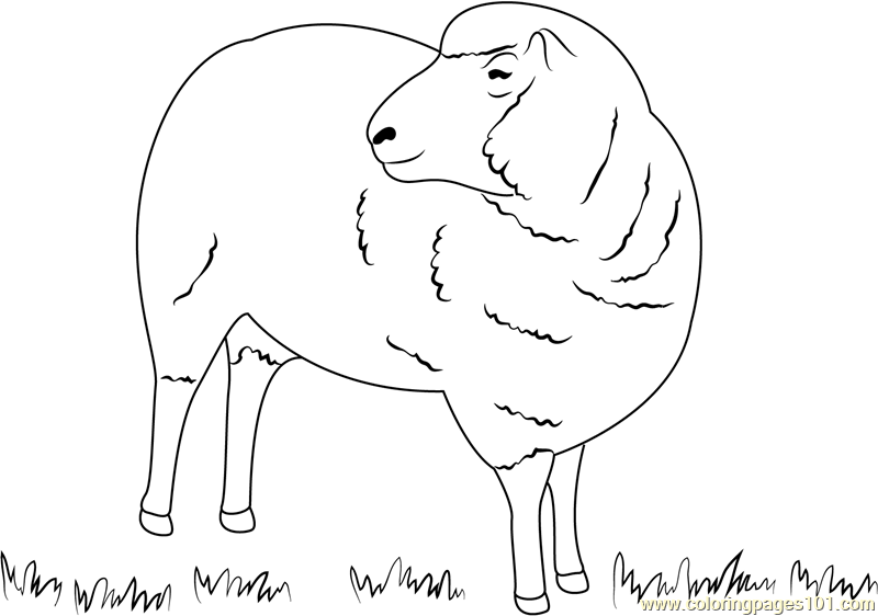 Cloned Sheep Coloring Page Free Sheep Coloring Pages