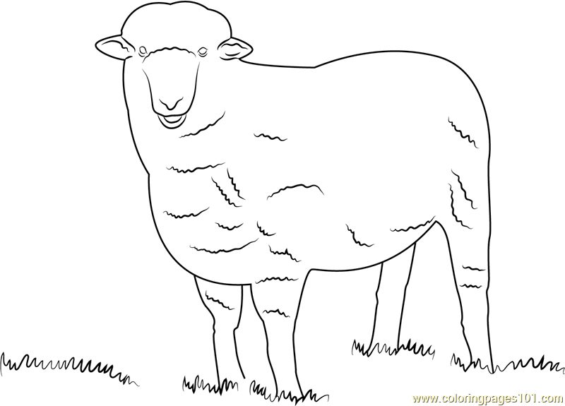 Corriedale Sheep Coloring Page