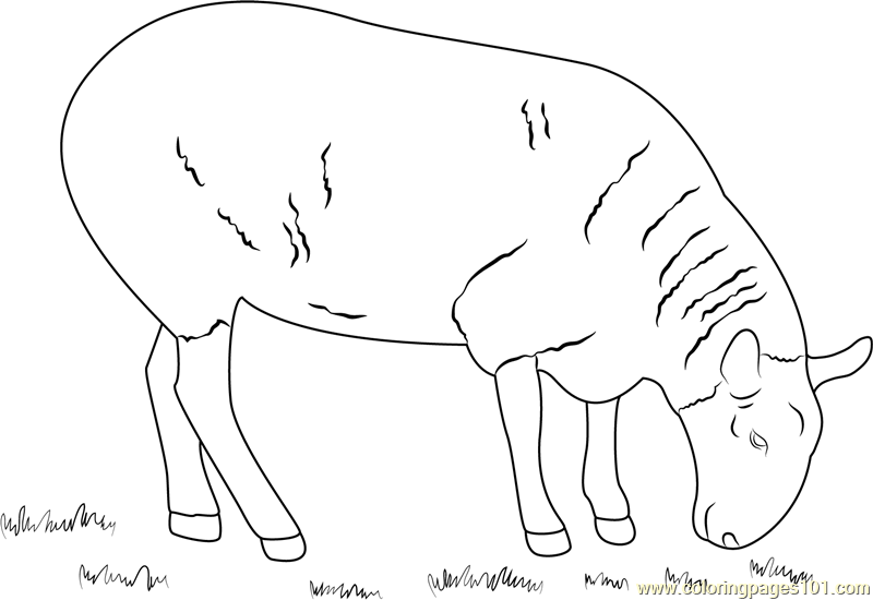 Sheep Eating Grass Coloring Page Free Sheep Coloring