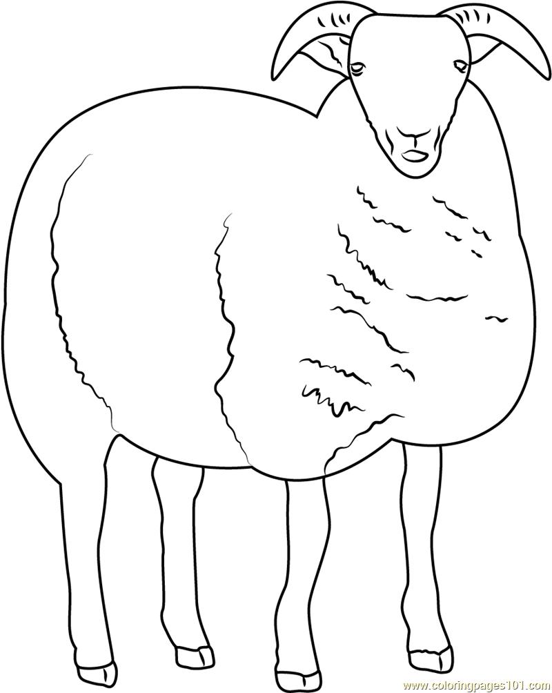 Sheep Coloring Page Free Sheep