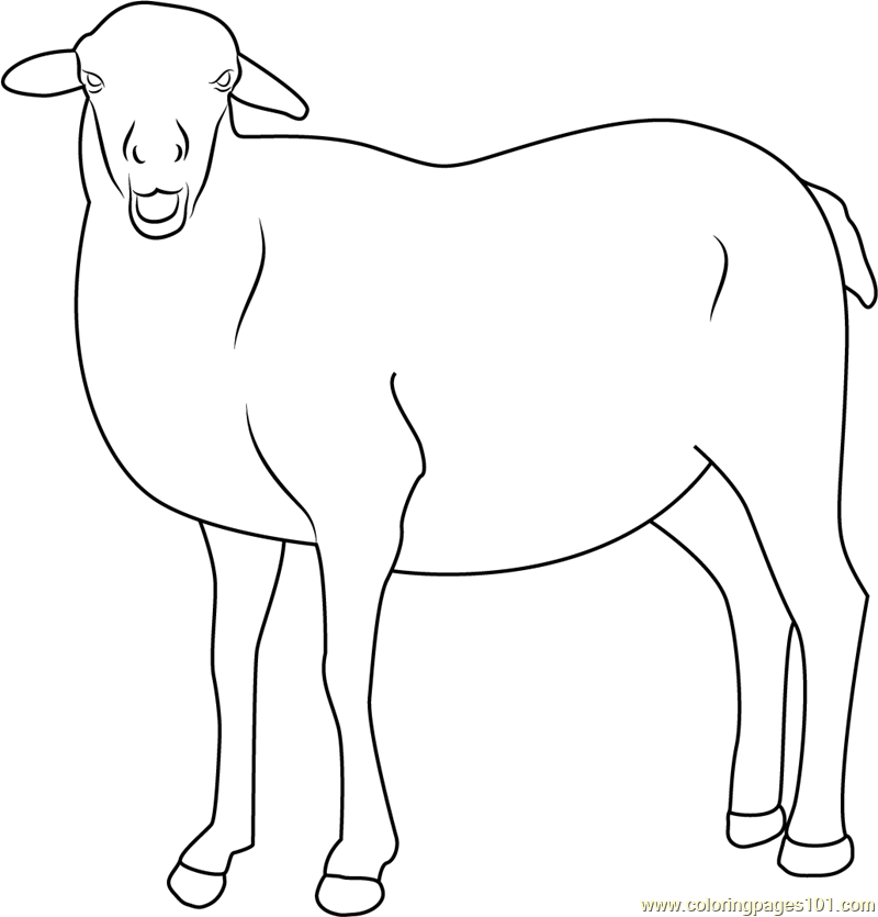 Smiling Sheep Coloring Page Free