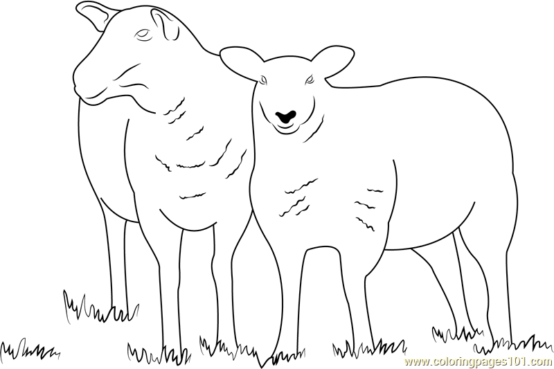 Two Sheeps Coloring Page