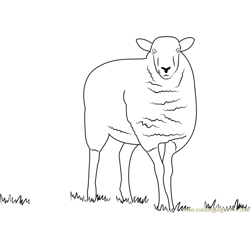 Hambledon Hill Sheep Free Coloring Page for Kids