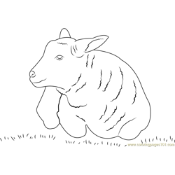 Lamb Sheep Free Coloring Page for Kids