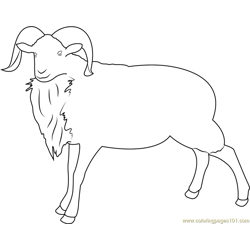 Montana Sheep Free Coloring Page for Kids