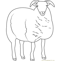 Sheep Free Coloring Page for Kids