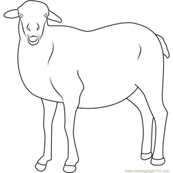 Smiling Sheep Free Coloring Page for Kids
