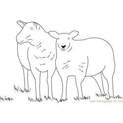 Two Sheeps Free Coloring Page for Kids