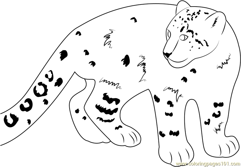 Smiling Snow Leopard Coloring Page