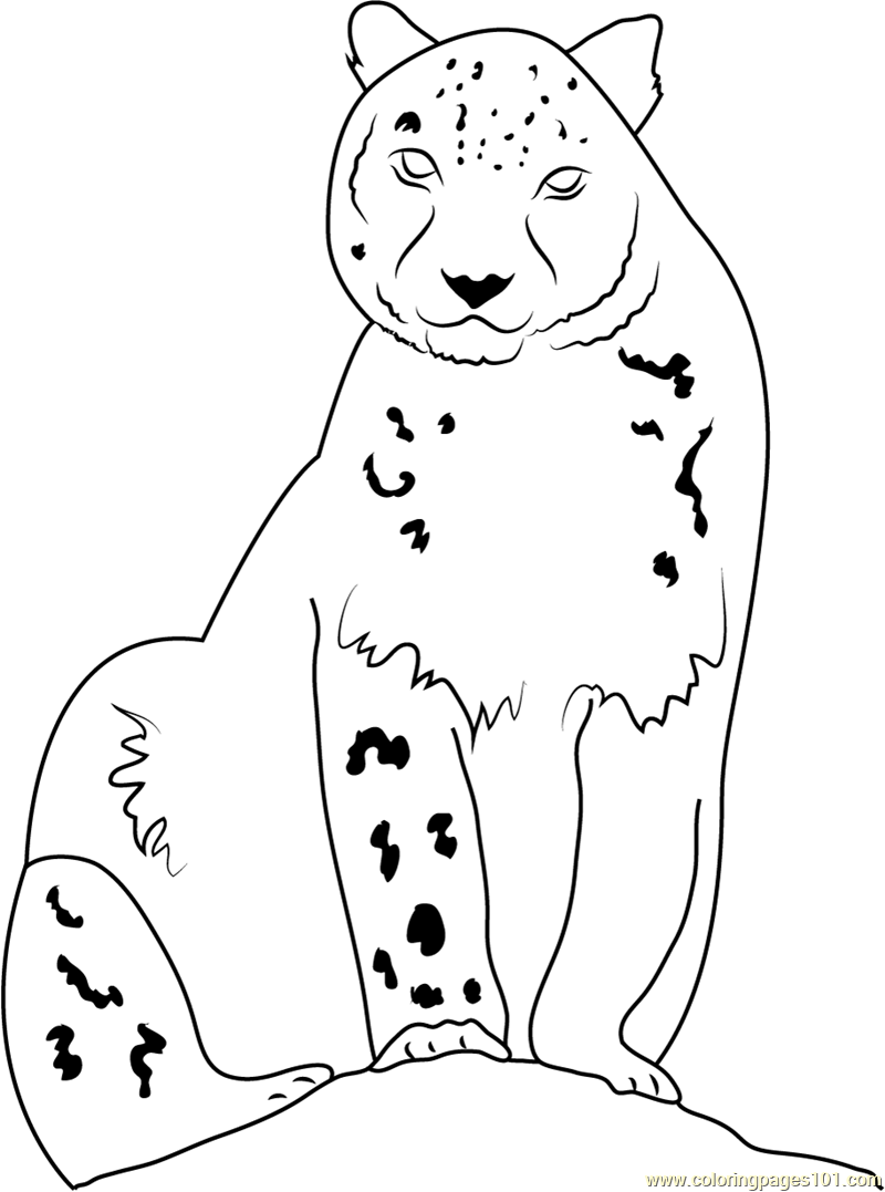 Snow Leopard Looking at Me Coloring Page