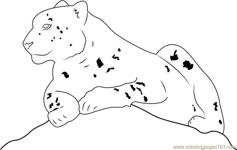 Snow Leopard Sitting Coloring Page Free Snow Leopard