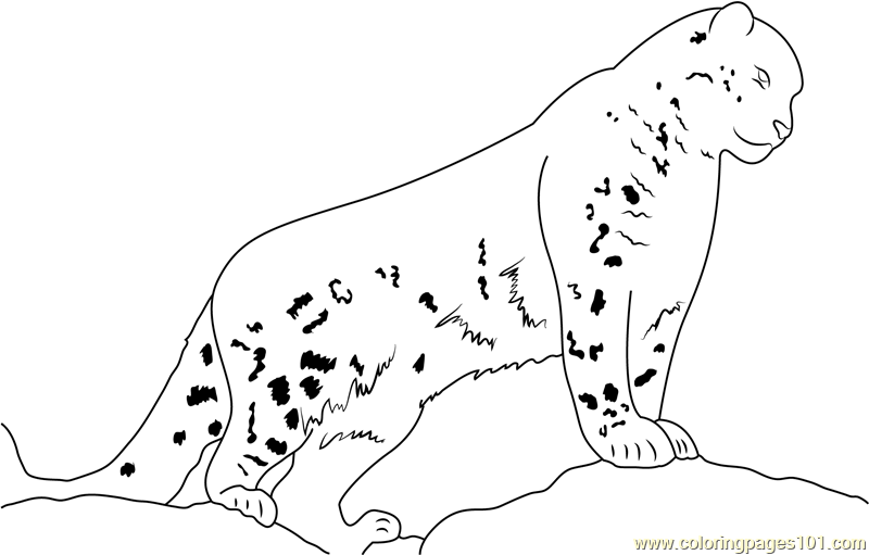 Snow Leopard Watch Coloring Page