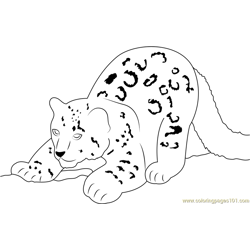 Snow Leopard Cub Free Coloring Page for Kids