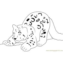 Snow Leopard Cub Drawing Sketch