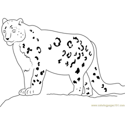 Snow Leopard Looking His Food Free Coloring Page for Kids