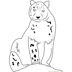 Snow Leopard Looking at Me Free Coloring Page for Kids