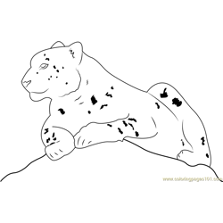Snow Leopard Sitting Free Coloring Page for Kids