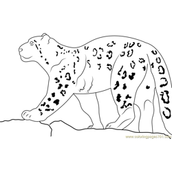 Snow Leopard Walking On Rock Free Coloring Page for Kids