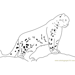 Snow Leopard Watch Free Coloring Page for Kids