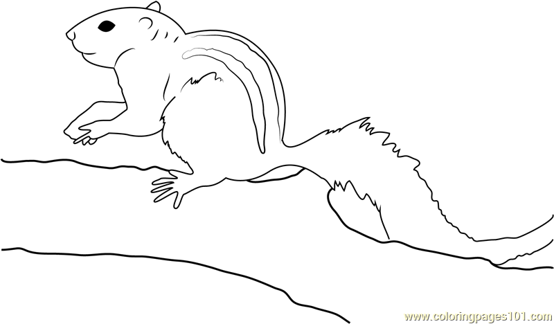 Indian Palm Squirrel Coloring Page