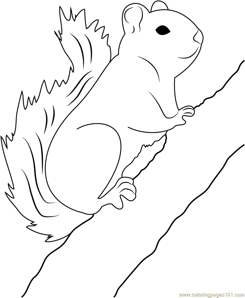 Red Squirrel on Tree Coloring Page