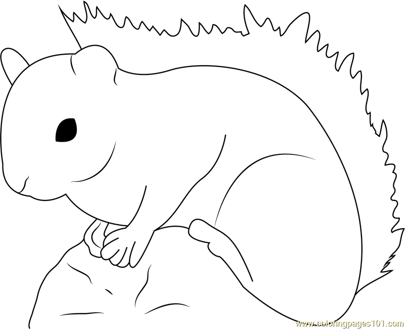 Red Squirrel Coloring Page
