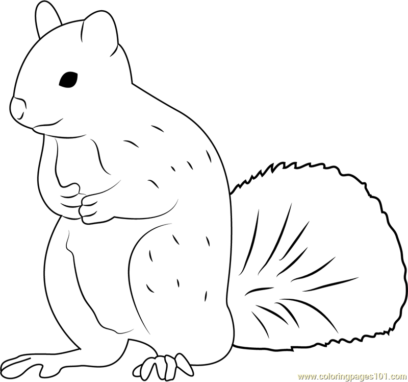 Squirrel Man Coloring Page Free