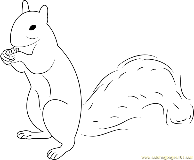 Squirrel Up Coloring Page Free