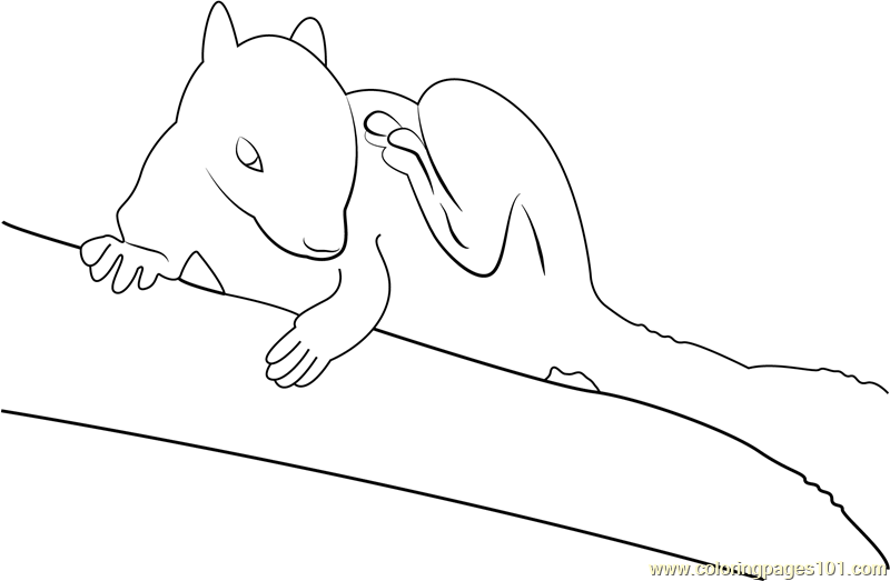 White Squirrel Coloring Page