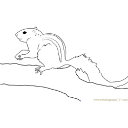Indian Palm Squirrel Free Coloring Page for Kids