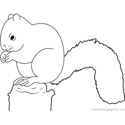 Red Squirrel Eating Free Coloring Page for Kids