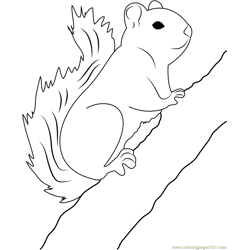 Red Squirrel on Tree Free Coloring Page for Kids