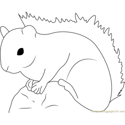 Red Squirrel Free Coloring Page for Kids