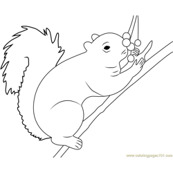 Squirrel Eating Berrys Free Coloring Page for Kids