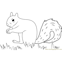 Squirrel Find His Food Free Coloring Page for Kids