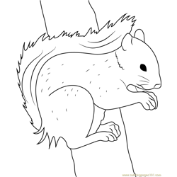 Squirrel Pose by Fantastic Fennec Free Coloring Page for Kids