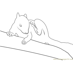 White Squirrel Free Coloring Page for Kids